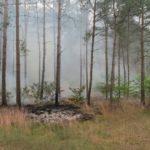 Waldbrand-Gerstedt2-2.jpg